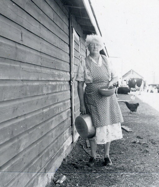 Gathering the eggs. Year: 1959 Place Name: Allan, SK Image Source: John Allwood Juel's mother, Inga Frydenlund, gathering the eggs.