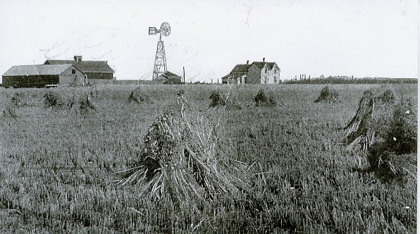 The Dorrell Farm Year: 1895 Place Name: Tuxford, SK Farm buildings and windmill