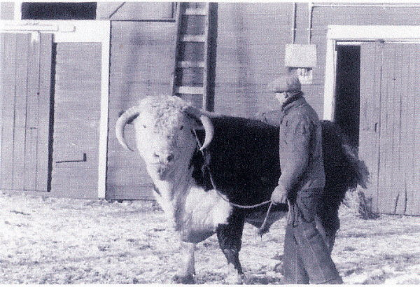Walter Lehnus and hereford bull