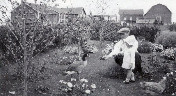 Staff Mickleborough with Gwen Year: 1935 Place Name: Eston Feeding wild Canada goose that nested at his bird sanctuary on the farm.