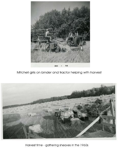 Harvesting Year: 1958/1960s Place Name: Preeceville, SK Top: Mitchell girls on binder and tractor helping with harvest. Bottom: Harvest time gathering sheaves in the 1960s