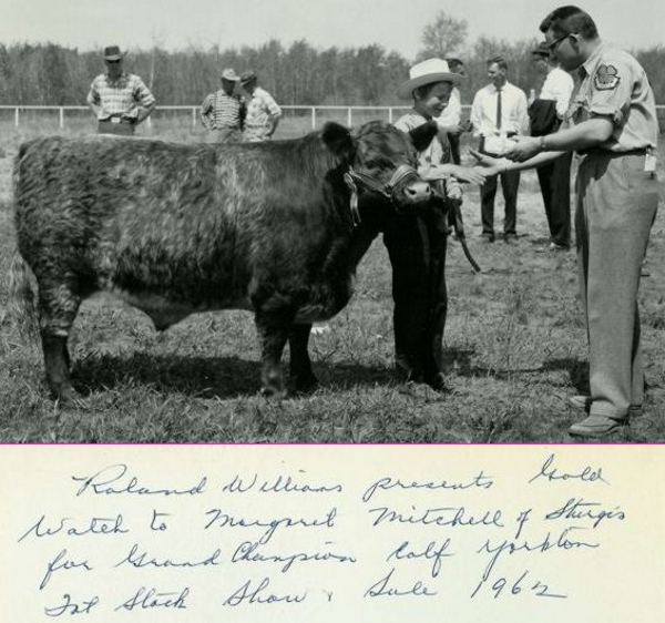 Margaret with her Champion Shorthorn steer Year: 1962
