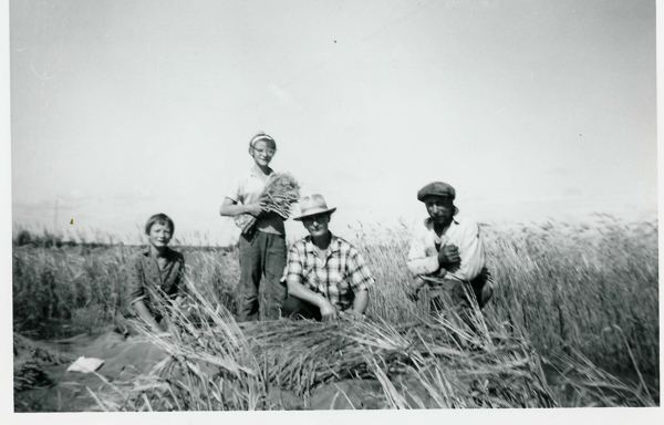 4-H Grain Project Year: 1960s Place Name: Preeceville, SK L/R: Margaret, Cathy with 4-H grain project, Mary & John