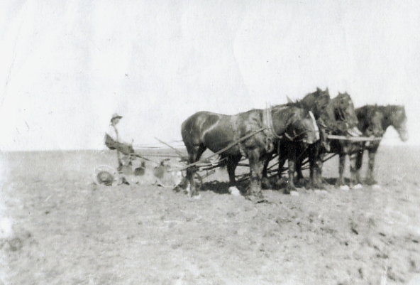 Sidney W.C Quinney breaking land with horses Year: 1914