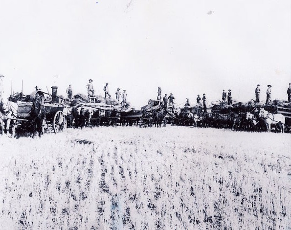 Threshing Year: 1908 Place Name: Swift Current Threshing in 1908 south east of Swift Current. Robert Owen Ross in the buggy in front of the threshing machine. Counting R. O. Ross, there were eighteen men in the crew. Note: Little colt with team second from the left.